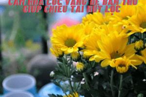 Cắm hoa cúc vàng để bàn thờ
